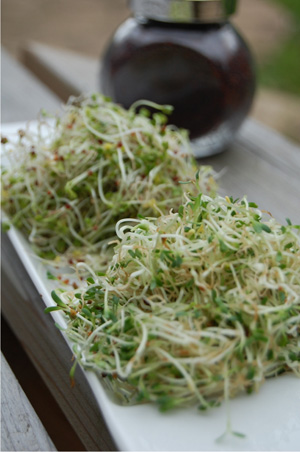 broccoli-sprouts