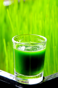 frozen-wheatgrass-weekly-tray